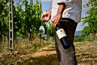 Enoturismo: scoprire l'Umbria attraverso i suoi vini