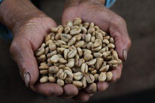 Caffè Amazzonico: l'Amazzonia peruviana e Roma non sono mai stati così vicini