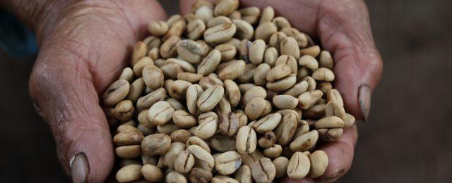 Amazzonico, il caffè specialty sostenibile