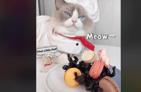 Gattini chef, spopolano su TikTok